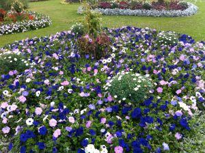 harlesdon_flowers